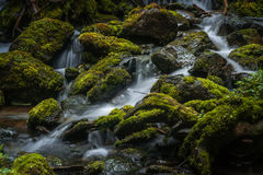 Mossy Creek. A wilderness creek flowing in the coastal mountains of British Columbia, Canada Royalty Free Stock Images