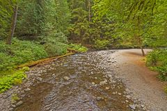 Wilderness Creek in a Temperate Rain Forest royalty free stock photography