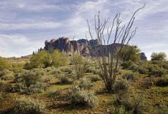 Wilderness desert trail. With Cactus in foreground and mountain in background Stock Photography