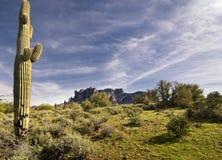 Wilderness desert trail Stock Images