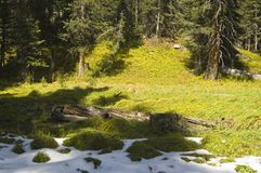 Wilderness early snow. Late summer snow in lush green mountain meadow Indian Peaks Wilderness, Colorado Royalty Free Stock Photography