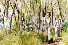 Wilderness explorer. Women walking outdoor in the woods, happy exploring and adventure lies ahead for these wilderness trekking friends stock image