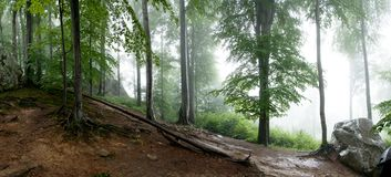 Wilderness forest in fog and rain, panoramic view. Wilderness forest in fog and rain with wet stones, panoramic view Royalty Free Stock Photo