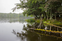 Wilderness Lake in the Rain Royalty Free Stock Photography