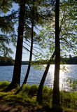 Wilderness Lake in Sunshine. Wilderness lake seen through silhouetted trees in late afternoon Stock Photos