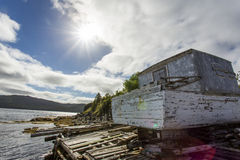 Wilderness lakeside Royalty Free Stock Image