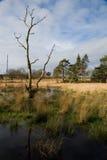 Wilderness landscape. Lone dead tree in a marshy wilderness Stock Photo