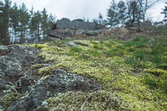 Wilderness landscape forest with moss on rocks Royalty Free Stock Photo