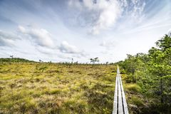 Wilderness landscape in the summer royalty free stock images