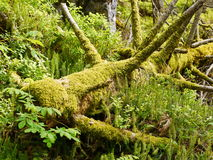 Wilderness moss in forest Stock Photos