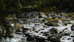 Wilderness mountain river stock video footage