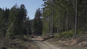 Wilderness, nature and the forest. Beautiful sunny day in the woods and cutting area