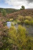 Wilderness nature at Glen Feshie in the highlands of Scotland. Bog landscape in Glen Feshie in the Cairngorms National Park of Scotland Stock Image