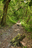 Wilderness path Stock Photography