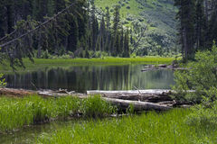 Wilderness Pond Stock Photography