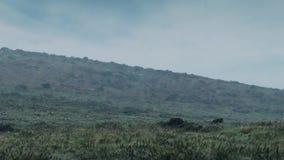 Wilderness In Rainstorm stock video footage