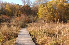 Wilderness ramp in marsh in autumn Stock Photos