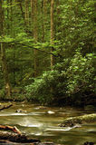 Wilderness River. River in western North Carolina mountains Royalty Free Stock Image