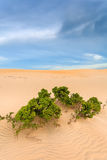 The wilderness of sand and Bush tree Stock Photo