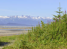 Wilderness scene in Alaska Royalty Free Stock Photo