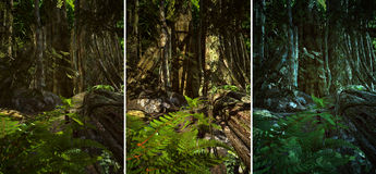 Wilderness Scene. 3d CG graphics jungle scene lighting in three variants Royalty Free Stock Photos