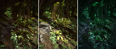 Wilderness Scene. 3d CG graphics jungle scene lighting in three variants Royalty Free Stock Image