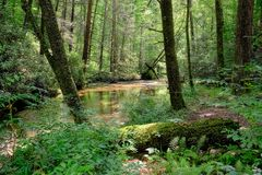 Wilderness. Scenic wilderness of the Pisgah National Forest in North Carolina, with a river flowing in a shaded forest with few sunlit spots penetrating in the Stock Image