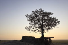The wilderness in a separate tree Stock Photo