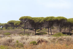 Wilderness in Spain Royalty Free Stock Photography