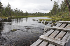 In the wilderness of Sweden Royalty Free Stock Image
