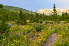 Wilderness trail Stock Photography