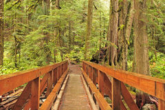 Wilderness Trail Bridge Royalty Free Stock Image