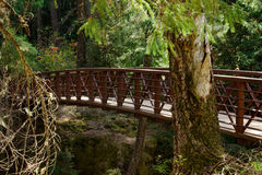Wilderness trail bridge Royalty Free Stock Image