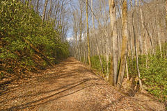 Wilderness Trail in the Mountains Royalty Free Stock Photography