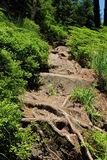 Wilderness trail, National Park Black Forest , Baden-Wuerttemberg, Germany Stock Photos