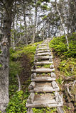 Wilderness trail stairs in Newfoundland Stock Image