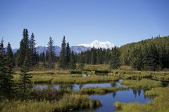 Wilderness view of Mt. Denali. Mt. Denali with view of trees and ponds Stock Photography
