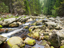 Wilderness of Vydra river Royalty Free Stock Photos