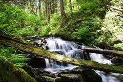Wilderness waterfall. Long exposure waterfall in the Idaho wilderness stock images
