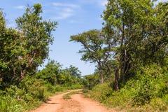 Wilderness Wildlife Dirt Road Explore Stock Photo