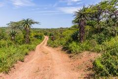 Wilderness Wildlife Dirt Road Explore Royalty Free Stock Image