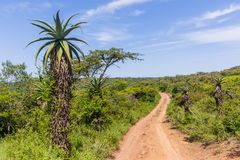 Wilderness Wildlife Dirt Road Explore Royalty Free Stock Photography