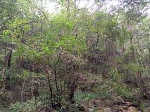 wildernis stock afbeeldingen