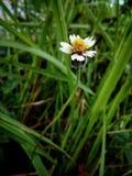 wildernis Stock Fotografie
