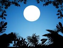 Wildernis bij nacht vector illustratie