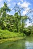Wildernis langs Martha Brae River in Jamaïca Royalty-vrije Stock Fotografie