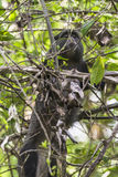 Wildernis in Nationaal Park, Tanzania royalty-vrije stock afbeeldingen