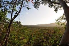 Wildernis op Fraser Eiland, Australië Stock Foto