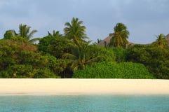 Wildernis op het maldivian eiland stock afbeelding