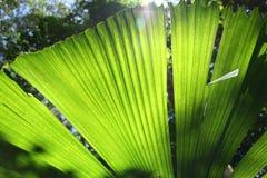 Wildernis Palmtree stock afbeeldingen